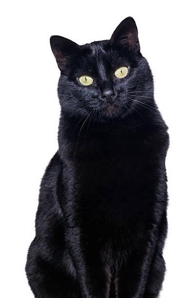Black cat picture id180848512?b=1&k=6&m=180848512&s=612x612&w=0&h=jyxzdsyey9uyiba6jvkuao 1nzmt5dzttyfgkxpccn8=