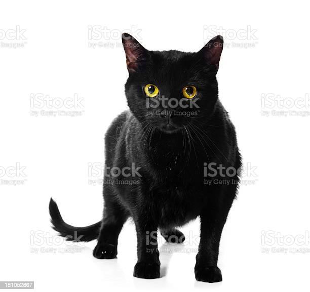 Black cat picture id181052867?b=1&k=6&m=181052867&s=612x612&h=sb62tdiqa u6mclqvovhkqacwcqx5azzwaj4li2ypuo=