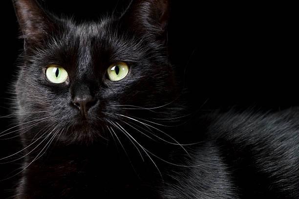Black cat picture id182689010?b=1&k=6&m=182689010&s=612x612&w=0&h=aa9zilmgp n8hmgvbeuebbcohnzuddqmzkrvtspoxzg=
