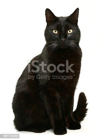 istock Black Cat 182745282