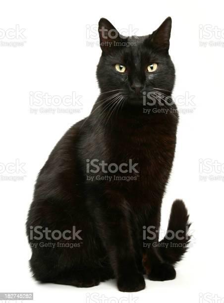 Black cat picture id182745282?b=1&k=6&m=182745282&s=612x612&h=papfkz9q1y1pqnmfmm4ebgu0zdcdddykymrr7ohhbc0=
