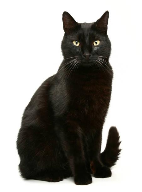 Black cat picture id182745282?b=1&k=6&m=182745282&s=612x612&w=0&h=hcguiysms vkfnsccllwsvzyn4icx5u9funnteezxdq=