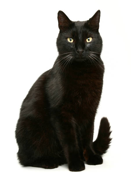 Black Cat Cat black cat stock pictures, royalty-free photos & images