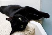 ブラックの猫