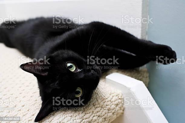 Black cat picture id184381635?b=1&k=6&m=184381635&s=612x612&h=r40aox0tlsks4d0lrnkicociwasibeeovtm7crggmf0=