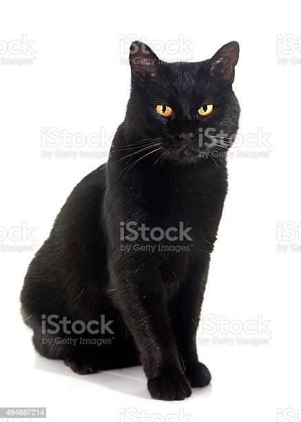 Black cat picture id494667214?b=1&k=6&m=494667214&s=612x612&h=tvbb0e2gb1i1osnntymxuogkgtz958ze1ga cc5fbc8=