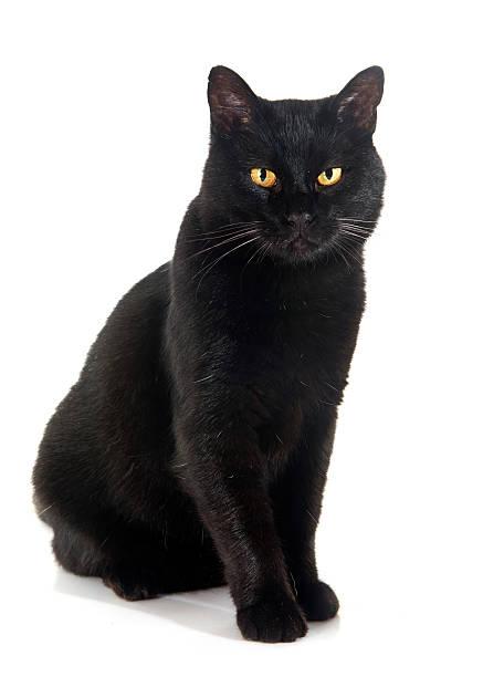 Black cat picture id494667214?b=1&k=6&m=494667214&s=612x612&w=0&h=gv qk7rxszfb yikamsxnggfek73zx59sj37exekzt8=