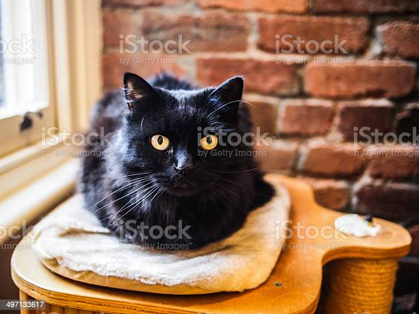Black cat picture id497133617?b=1&k=6&m=497133617&s=612x612&h=rrlrcgv8ik71 z9jlf3yb1ulceql91pcvd9hwcb9fsq=
