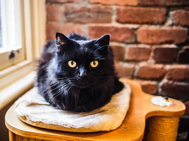 Schwarze cat – Foto
