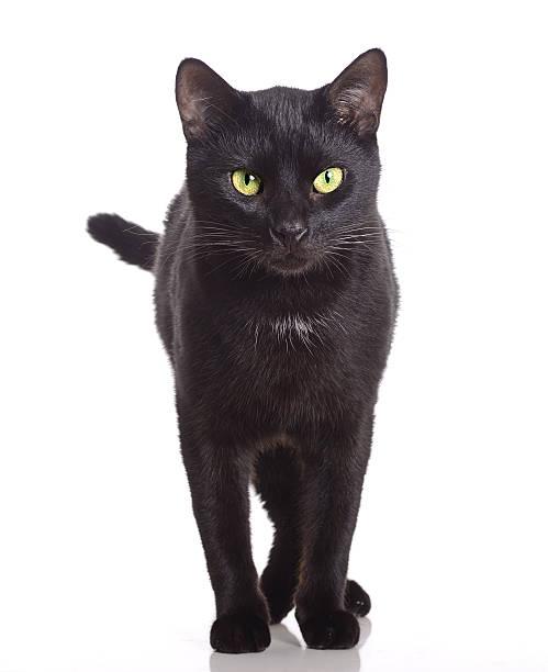 Black cat picture id500871304?b=1&k=6&m=500871304&s=612x612&w=0&h=oqgpm6c2fytyihrykiuvnrquhc2zxz3lhkf7upeuuny=