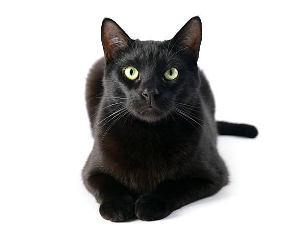 Black cat picture id513127988?b=1&k=6&m=513127988&s=612x612&w=0&h=wtid3k0x9f0eqlgj2xxmwtnte8zou8s snc4qmnsfyu=