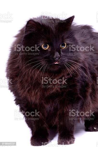 Black cat picture id518593231?b=1&k=6&m=518593231&s=612x612&h=vxpmotrgd7anakkm8ywx4fxmnzpvdcbdfdlguk5thlk=