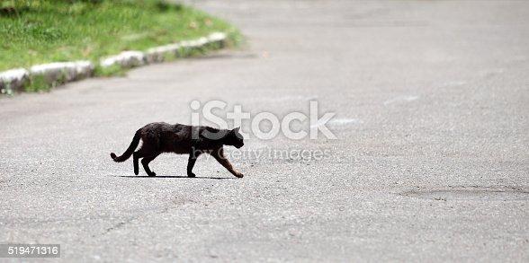 Black cat crossing the road.