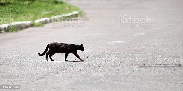 Black cat picture id519471316?b=1&k=6&m=519471316&s=612x612&h=izuoxju i1hepcbjheq8jpfkuy wp1ygfcni iene8e=