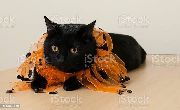 Black cat picture id520687445?b=1&k=6&m=520687445&s=612x612&h=b6ioss1u3pzcucytc6e24p5kyobcdvu9pgilw34sgac=
