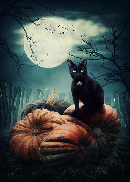 Black cat picture id594021152?b=1&k=6&m=594021152&s=612x612&w=0&h=60fbveg4yotvbsxtq4ikgcjx9qafjill4obizm jhiw=