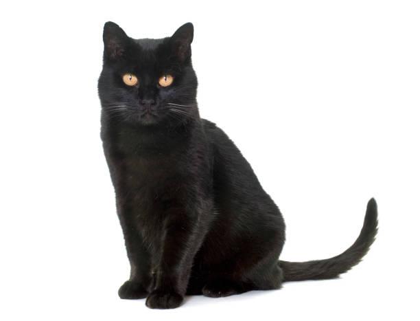 Black cat picture id652549350?b=1&k=6&m=652549350&s=612x612&w=0&h=nphfrisg8kgybb4fzpoyi1zgxz06xp5mse2y4 a6dbk=