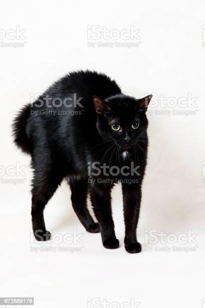 Black cat picture id672889178?b=1&k=6&m=672889178&s=612x612&h=cvnaxewifqrek0xws utiqde6kjnprl84meqg6olxpm=