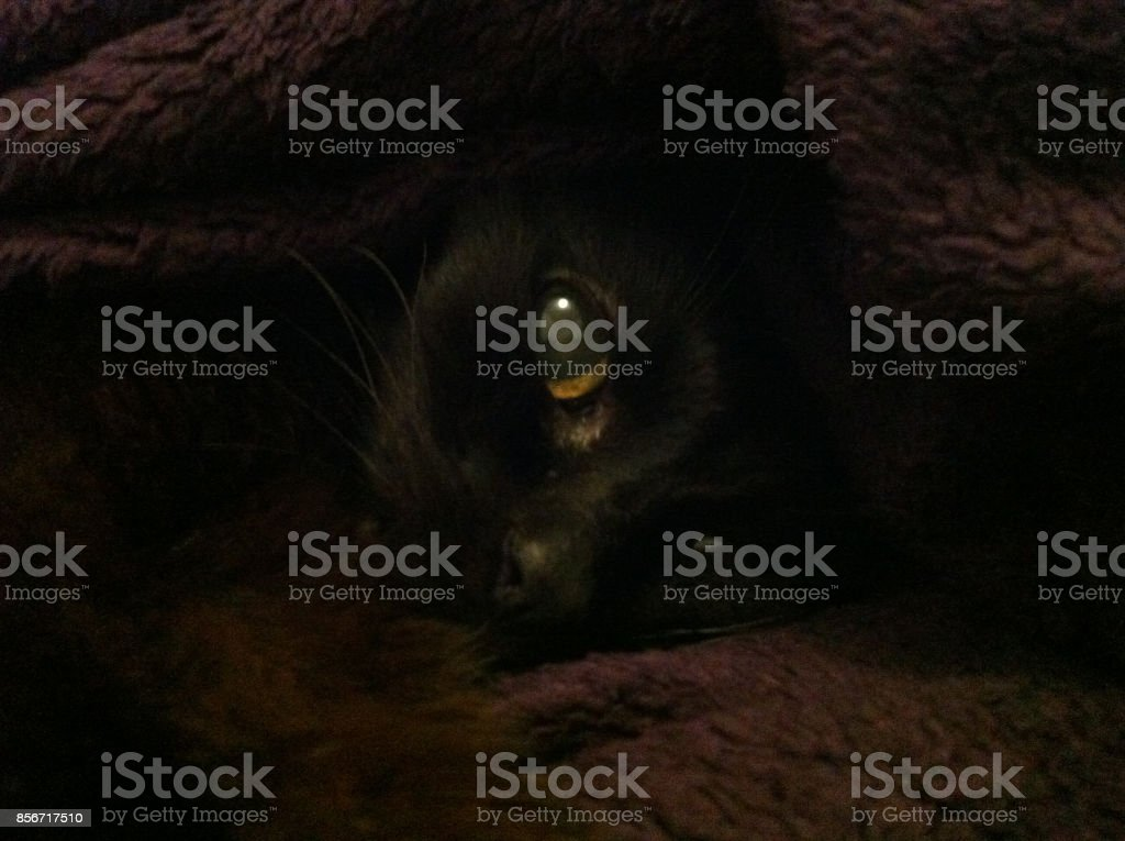 Chat noir stock photo