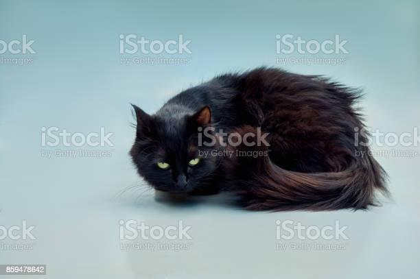 Black cat picture id859478642?b=1&k=6&m=859478642&s=612x612&h=svtexsjuo 8mt4jtlbovvu0koq1brzg6wze8iehswt0=