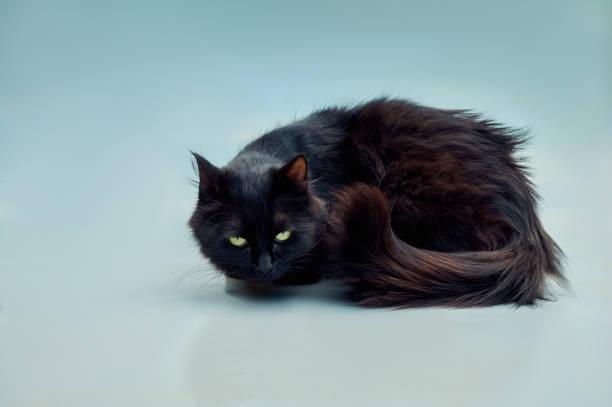 Black cat picture id859478642?b=1&k=6&m=859478642&s=612x612&w=0&h=hbwgtall77mnievj 6q sba vccn2vo5rvh2in8cq40=