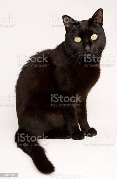 Black cat picture id91820501?b=1&k=6&m=91820501&s=612x612&h=aqqoz8c7a27khrjwa3akejx7f7rljv9zyqfis csbaa=
