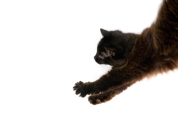 Black cat picture id92335131?b=1&k=6&m=92335131&s=612x612&w=0&h=ueamndg9tbezki ueahosywlbf uxpugyvji1hu i6g=