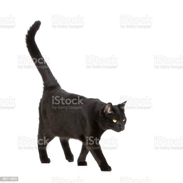 Black cat picture id93213691?b=1&k=6&m=93213691&s=612x612&h=3p0a9bbddouiolxbbmedgog8eftplg3xnscawye4rrm=