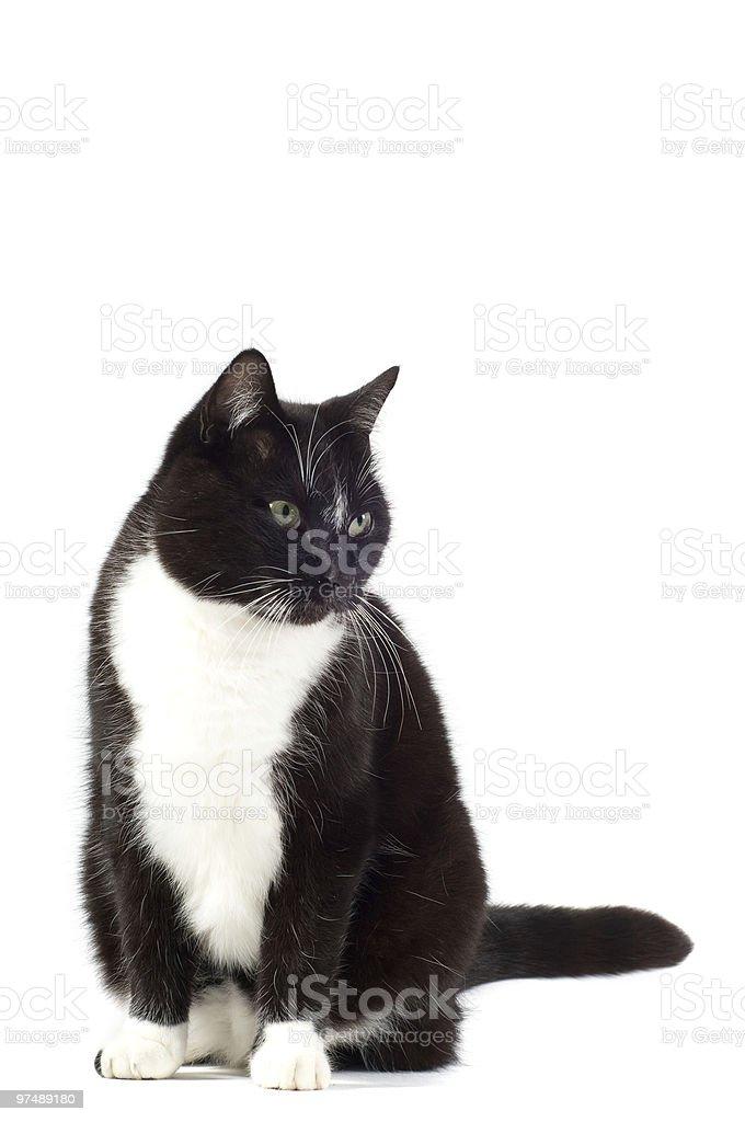 Black cat royalty-free stock photo