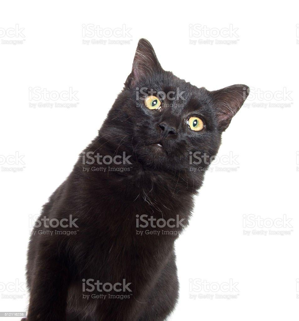 Black cat playing stock photo