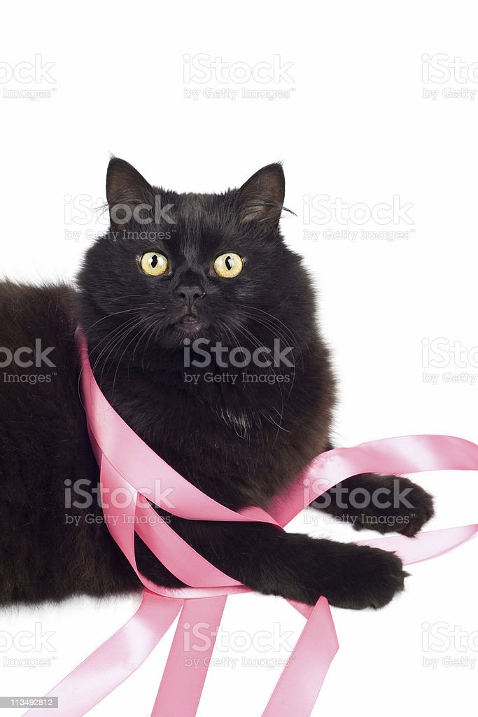 black cat playing with pink ribbon royalty-free stock photo