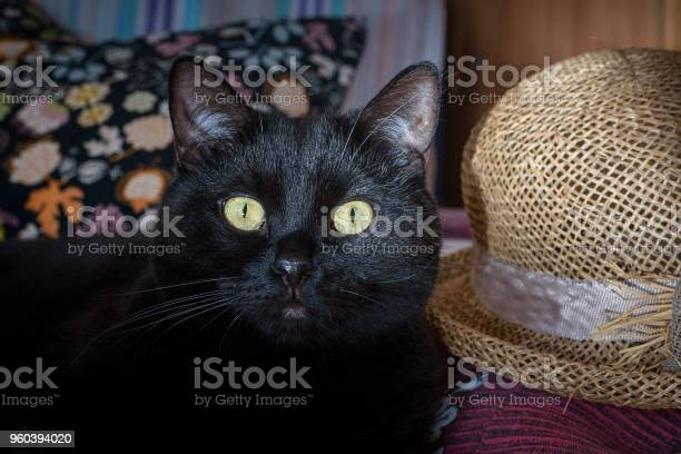 Black cat portrait and straw hat picture id960394020?b=1&k=6&m=960394020&s=612x612&h=af5cu43uysnim9jvebvy doty6f3jpqaqmodkpwevsw=