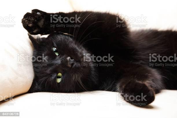 Black cat portrait picture id643106728?b=1&k=6&m=643106728&s=612x612&h=s1jzmv5sce nzirklmi0fumez ps224ihbqk0abiib8=