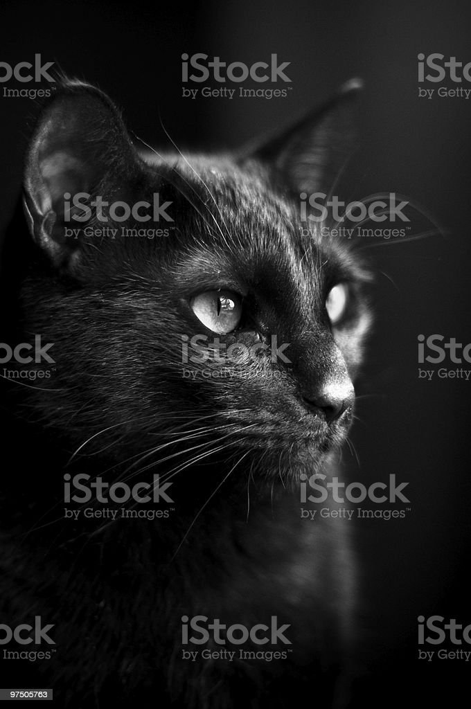 Black Cat Profile royalty-free stock photo