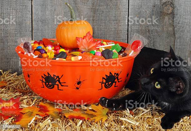 Black cat protecting halloween candy picture id176866202?b=1&k=6&m=176866202&s=612x612&h=bn2hhjony02cqb35gqrea6qwwwsn soapxdbr seuic=