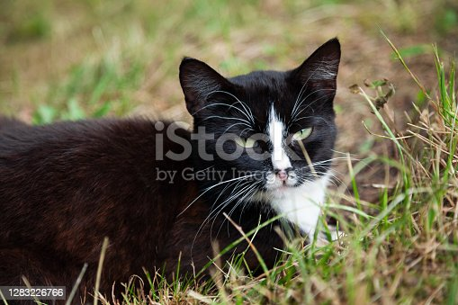 istock Black cat relaxing on the lawn 1283226766