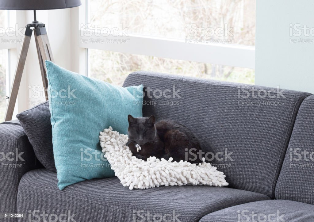 Black cat relaxing stock photo