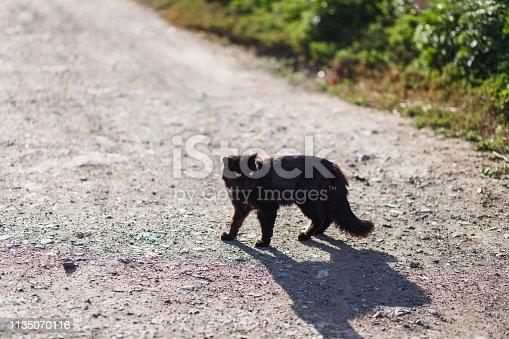 black fluffy cat runs across the road