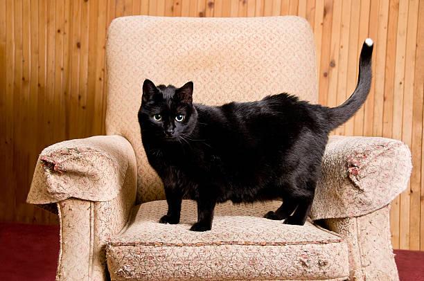 Black cat scratching post picture id175590772?b=1&k=6&m=175590772&s=612x612&w=0&h=fjnnqshgknqvx1o97ykebbomodgk2fbkii0epseqmji=