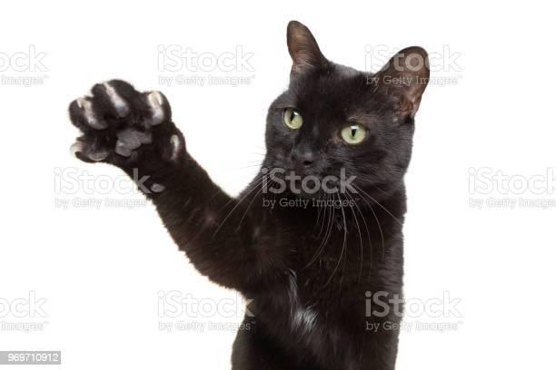 Black cat showing his claws picture id969710912?b=1&k=6&m=969710912&s=612x612&h=rik5vuxprpbviy0hev otn5b7thq7srswnujvn7aexw=