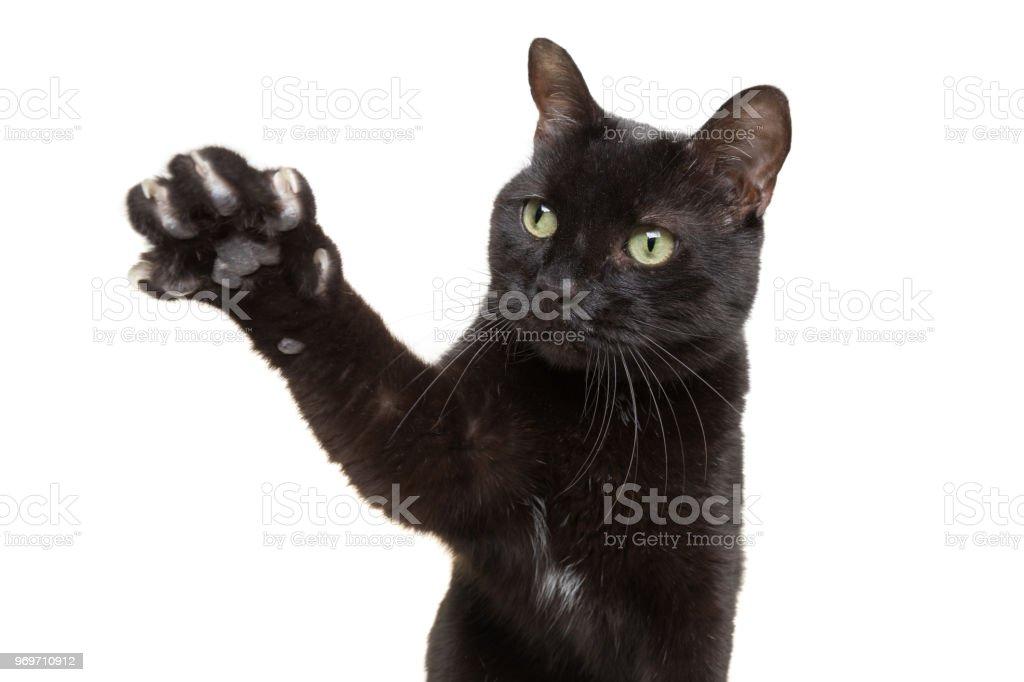 Schwarze Katze zeigt seine Krallen – Foto