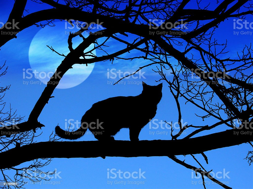 Black Cat Silhouette in Halloween royalty-free stock photo