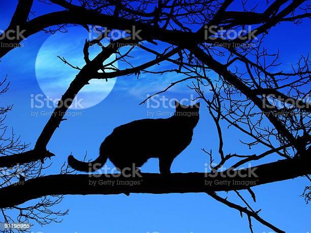Black cat silhouette in halloween picture id91198985?b=1&k=6&m=91198985&s=612x612&h=xpgzzsb4slnv8plddj519u1hnu4jfarld5bag4xzdjs=