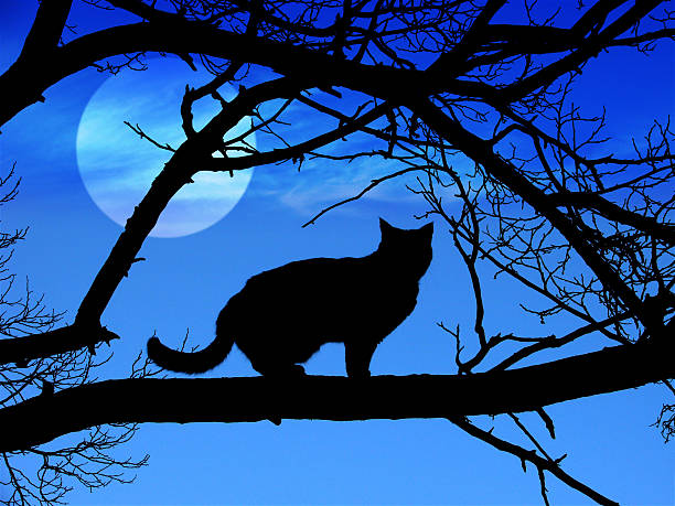 Black cat silhouette in halloween picture id91198985?b=1&k=6&m=91198985&s=612x612&w=0&h=vijwfnjf0r7r6fd8vu cw2tjhrax1o5n0ipac6g ing=