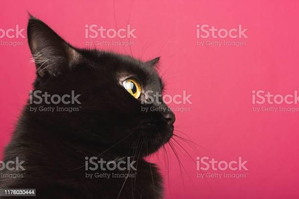 Black cat sits in profile looks around in shock on a pink background picture id1176030444?b=1&k=6&m=1176030444&s=612x612&h=0l0bv8xn02loizj  dn1ohlhegal4fruki6plvhhnjk=