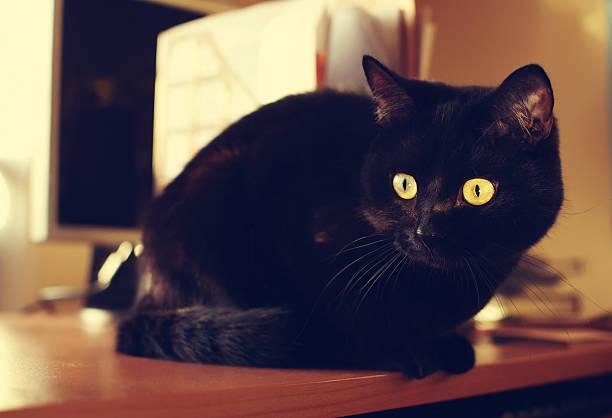 Black cat sits on the desk picture id473308818?b=1&k=6&m=473308818&s=612x612&w=0&h=xmuj4msgziu0eob5z9ffapsajls62shpcky numtly8=