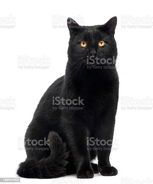 Black cat sitting and looking at the camera isolated picture id188054905?b=1&k=6&m=188054905&s=612x612&h=cnx3rntabtgdnn84zmqjdwbgdvazfilzeihfqmbnslm=