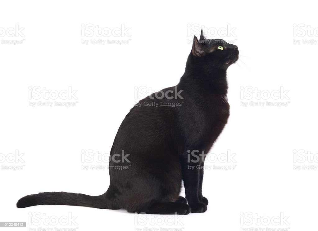 Black cat sitting and looking stock photo
