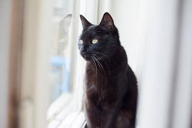 Black cat sitting and looking through the window picture id584761508?b=1&k=6&m=584761508&s=612x612&w=0&h=x37glvzumdwlj7s0dtixso9oromtm6u4dvalwjcklli=