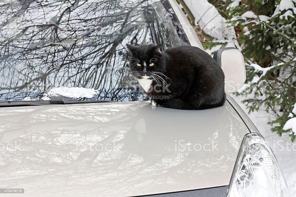 black cat sitting on a car stock photo